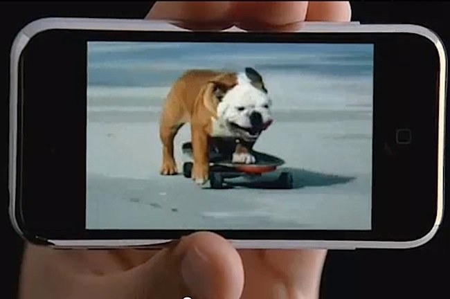 21-Dog Skating on YouTube.jpg